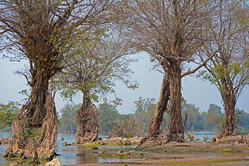 La foresta di Stung Treng